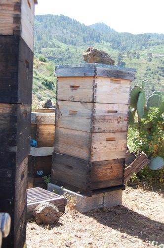 wieviel honig pro bienenstock